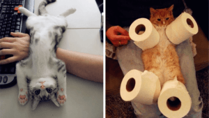 cheapest cat insurance