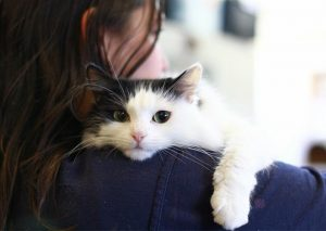 top cat moving service, cat house drug rehab cincinnati, signs your cat is going to give birth, cat health hotline