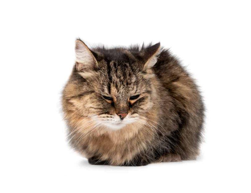 cat meowing, cat pictures, minecraft cat, cat gif, cat scratching post, royal canin cat food, how to draw a cat, cat grooming near me, cat bed, cat 5 cable, kitty cat, funny cat memes, why does my cat lick me, cat 6 ethernet cable, blue buffalo cat food, cat lifespan, cat 5 vs cat 6, cat cartoon, cat sitting, cat 6 cable, cat puns, automatic cat feeder, magic cat academy, cat power purina cat food, cat rescue near me, sheba cat food, werewolf cat, talking kitty cat, best dry cat food, cat condo, cat dewormer, cat treats, nature cat, cat teeth, cat grooming, cat boarding near me, cat loaf, cat noises, cat beds, cat diarrhea, cat body language, automatic cat litter box, cat tv, cat furniture, cat fountain, cat 7 ethernet cable, iams cat food, fluffy cat, hell cat, cat 5e vs cat 6, cat 6, arctic cat parts, cool cat casino, cat rescue, homemade cat food, sam & cat, doja cat nudes big cat world cat, cat breeds cat stock cat memes crying cat cat food fat cat cat ninja cat litter cute cat best cat food bob cat cat sounds cat cafe cat litter box cat eyes cat grass cat house cool cat orange cat, cat allergies, cat stevens songs, diy cat tree, oriental cat, bengal cat price, cat 5e, tom cat, adopt a cat near me, wild cat, cat music, purina one cat food, cat insurance, fancy feast cat food,