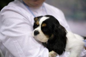 emotional companion dogs