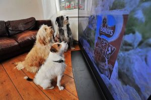 which dog is best for home security