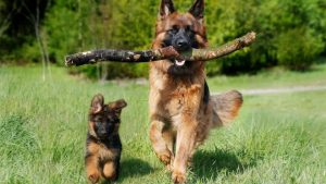 dog lawyer, pet injury lawyer, personal injury lawyer, dog bite attorneys los angeles dog 65 days pregnant no signs of labor dog on trifexis still has fleas german shepherd homeowners insurance
