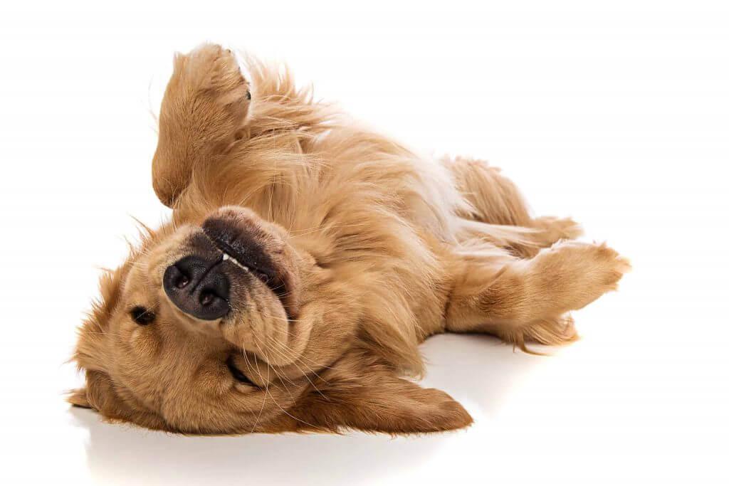 dog, dog grooming near me, dog park near me, pitbull dog, dog dna test, dog food, dog beds, dog training near me, dog groomers near me, hot dog, dog boarding near me, best dog food, dog collars, dog crate, lazy dog, dog days, national dog day, dog training, akita dog, dog bed, blue buffalo dog food, dog adoption near me, dog tags, royal canin dog food, dog groomer near me, dog kennels, dog shelters near me, dog barking, dog years, dog toys, malinois dog, does the dog die, homemade dog food, fromm dog food, dog insurance, downward dog, smile dog, greyhound dog, dog diarrhea, wolf dog, victor dog food, homemade dog treats, how to draw a dog, dog rescues near me, dog memes, dog food advisor, service dog, wag the dog, dog treats, weiner dog, emotional support dog, cartoon dog, dog boarding, science diet dog food, dog trainers near me, kong dog toys, bird dog, dog haus, dog drawing, sheep dog, african wild dog, dog rescue near me, dog cage, mexican hairless dog, purina dog food, nutro dog food, greater swiss mountain dog, best dog food brands, merrick dog food, dog daycare near me, dog crates, orijen dog food, mobile dog grooming, dog water, rachael ray dog food, dog wash near me, happy dog, dog clippers, diamond dog food, blue dog food, dog tick, dog fence, grain free dog food, dog gate, dog groomers, wireless dog fence, dog groomer, bear dog, large dog crate, dog daycare, dog shelter near me, bull dog, dog walker, mobile dog grooming near me, dog pictures, diamond naturals dog food, wellness dog food, dog in spanish, canidae dog food, dog treat recipes, dog friendly restaurants near me, iams dog food, natural balance dog food, dog kennels near me, hypoallergenic dog, acana dog food, cbd dog treats, dog videos, beagle dog, dog bone, how often should i take my dog to the vet, dog allergies, ugly dog, cat dog, dog sitting, franklin county dog shelter, hot dog recipes, dog bowls, dog teeth, mop dog, dog poop, purina one dog food, lab dog, taste of the wild dog food, nutris