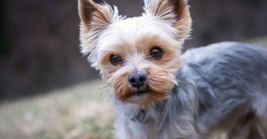 dog grooming near me, dog dna test, dog food, dog beds, dog training near me, dog groomers near me, hot dog, dog boarding near me, best dog food, dog collars, dog crate, lazy dog, dog days, national dog day, dog training, akita dog, dog bed, blue buffalo dog food, dog adoption near me, dog tags, royal canin dog food, dog groomer near me, dog kennels, dog shelters near me, dog barking, dog years, dog toys, malinois dog, does the dog die, homemade dog food, fromm dog food, dog insurance, downward dog, smile dog, greyhound dog, dog diarrhea, wolf dog, victor dog food, homemade dog treats, how to draw a dog, dog rescues near me, dog memes, dog food advisor, service dog, wag the dog, dog treats, weiner dog, emotional support dog, cartoon dog, dog boarding, science diet dog food, dog trainers near me, kong dog toys, bird dog, dog haus, dog drawing, sheep dog, african wild dog, dog rescue near me, dog cage, mexican hairless dog, purina dog food, nutro dog food, greater swiss mountain dog, best dog food brands, merrick dog food, dog daycare near me, dog crates, orijen dog food, mobile dog grooming, dog water, rachael ray dog food, dog wash near me, happy dog, dog clippers, diamond dog food, blue dog food, dog tick, dog fence, grain free dog food, dog gate, dog groomers, wireless dog fence, dog groomer, bear dog, large dog crate, dog daycare, dog shelter near me, bull dog, dog walker, mobile dog grooming near me, dog pictures, diamond naturals dog food, wellness dog food, dog in spanish, canidae dog food, dog treat recipes, dog friendly restaurants near me, iams dog food, natural balance dog food, dog kennels near me, hypoallergenic dog, acana dog food, cbd dog treats, dog videos, beagle dog, dog bone, how often should i take my dog to the vet, dog allergies, ugly dog, cat dog, dog sitting, franklin county dog shelter, hot dog recipes, dog bowls, dog teeth, mop dog, dog poop, purina one dog food, lab dog, taste of the wild dog food, nutrisource dog food, dog bite, dog walkin